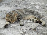 gatto - 15 luglio 2011  - Erice (955 clic)