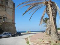 Torre di avvistamento e palme attaccate dal punteruolo rosso - 13 novembre 2011  - Marausa lido (787 clic)