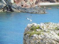 baia - 8 maggio 2011  - Terrasini (1652 clic)