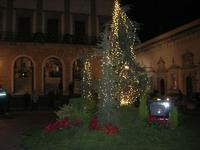 albero di Natale in piazza - notturna - 4 dicembre 2010 CALTAGIRONE LIDIA NAVARRA
