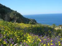 flora e mare - 3 aprile 2011  - Riserva dello zingaro (689 clic)