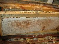 visita all'Apicoltura Cannizzaro - arnie - illustrazione della lavorazione del miele - 5 dicembre 2010  - Grammichele (2772 clic)