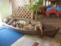 barca con all'interno oggetti della cultura locale in esposizione - La Torre di Nubia - 20 novembre 2011  - Nubia (821 clic)