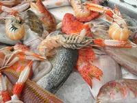 pesci in esposizione - La Cambusa - 16 ottobre 2010  - Castellammare del golfo (2196 clic)