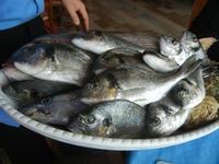 piatto con pesci - La Torre di Nubia - 20 novembre 2011  - Nubia (1608 clic)