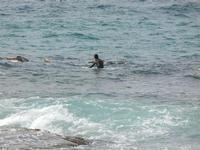 surf - 12 giugno 2011  - Cornino (1430 clic)