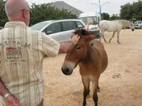 pony e cavallo - C/da Cucca - La Valle dei Tramonti - 13 giugno 2010  - Custonaci (1889 clic)