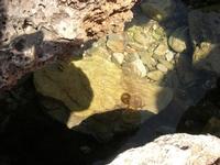 medusa all'Isulidda - 24 agosto 2010  - Macari (1925 clic)