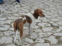cane all'interno del Baglio Isonzo - 25 settembre 2011  - Scopello (796 clic)