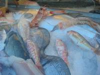 pesci in vetrina - La Cambusa - 21 febbraio 2010   - Castellammare del golfo (3364 clic)