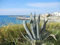 agave e scorcio del paese - 8 maggio 2011  - Terrasini (1622 clic)