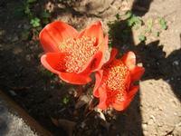 fiori - 4 ottobre 2011  - Alcamo (664 clic)