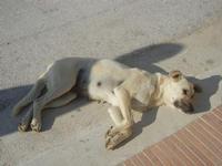 cane randagio disteso al sole - 13 novembre 2011  - Marausa lido (847 clic)