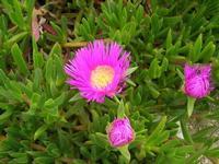 flora - 20 marzo 2011  - Cornino (1786 clic)