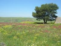 la campagna  a primavera - 1 maggio 2010  - Fulgatore (2912 clic)
