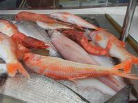 pesci in vetrina - La Cambusa - 2 novembre 2011  - Castellammare del golfo (1069 clic)
