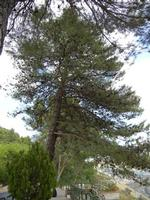 pino - 21 agosto 2011  - Giuliana (1368 clic)