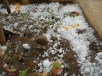 una spruzzata di neve - 26 febbraio 2011  - Alcamo (1284 clic)