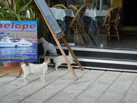 gatti al porto - 30 giugno 2011  - Castellammare del golfo (742 clic)