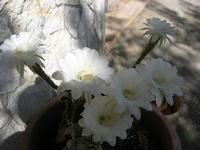 fiori - 12 settembre 2010  - Alcamo (2049 clic)