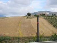 panorama con campo di grano ed uliveto - 12 giugno 2011 BUSETO PALIZZOLO LIDIA NAVARRA