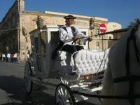 Infiorata 2010 - Corteo Barocco - 16 maggio 2010  - Noto (4214 clic)