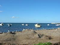sul lungomare - alghe e gabbiani - 31 luglio 2010  - Bonagia (4449 clic)
