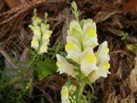 fiori nati su una palma - 28 aprile 2011  - Castellammare del golfo (1151 clic)