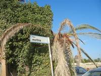 Viale Mothia - palma distrutta dal punteruolo rosso - 13 novembre 2011  - Marausa lido (779 clic)