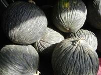 meloni bianchi o purceddi - 7 ottobre 2011  - Alcamo (965 clic)
