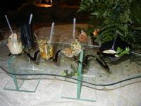 buffet di aperitivi - L'Agorà - 1 ottobre 2011  - Segesta (869 clic)