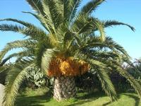 palma - C/da Manostalla - 16 gennaio 2011  - Partinico (1677 clic)