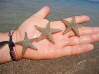 Zona Canalotto - stelle marine - 19 agosto 2011  - Alcamo marina (1255 clic)