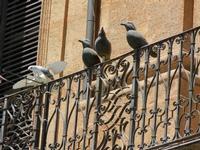 Sotto quale cielo? - Mostra presso Palazzo Riso, Museo d'Arte Contemporanea della Sicilia in Corso V