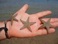 Zona Canalotto - stelle marine - 19 agosto 2011  - Alcamo marina (1287 clic)