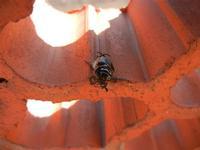 scarabeo alato - 26 settembre 2011  - Alcamo (632 clic)