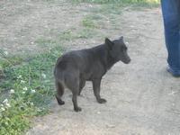 SALINAGRANDE - Oasi WWF - cane - 13 novembre 2011  - Trapani (744 clic)
