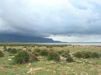 distesa di palme nane - Golfo di Bonagia e Monte Erice - 14 febbraio 2010   - Cornino (2474 clic)