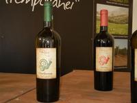 Azienda Orestiade Vini - esposizione - 31 agosto 2011  - Gibellina (1198 clic)