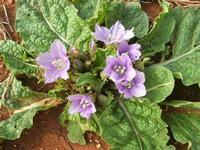 flora all'Isulidda - 26 settembre 2010  - Macari (2092 clic)