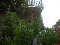 ragno e ragnatela - 2 novembre 2011  - Alcamo (667 clic)