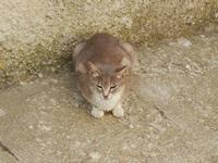 gatto - 15 luglio 2011  - Erice (894 clic)