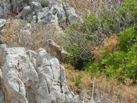 falco nei pressi dell'Isulidda - 24 luglio 2011  - Macari (829 clic)