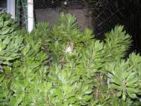 ragno e ragnatela - 2 novembre 2011  - Alcamo (582 clic)