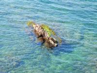 panorama sul mare - scoglio - 8 maggio 2011 TERRASINI LIDIA NAVARRA