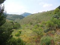 zona archeologica - panorama - 23 maggio 2011  - Segesta (869 clic)