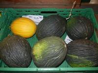purcidduzzi (meloni bianchi) e melone giallo - 22 settembre 2011  - San vito lo capo (1492 clic)