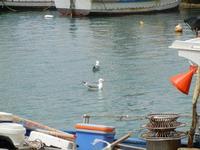 al porto - barche e gabbiani - 23 maggio 2011  - Castellammare del golfo (860 clic)