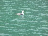 al porto - gabbiano - 23 maggio 2011  - Castellammare del golfo (879 clic)