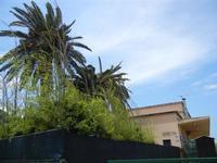 palme attaccate dal punteruolo rosso nel giardino della stazione ferroviaria - 2 giugno 2011  - Segesta (887 clic)